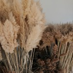The Present Perfect: gedroogde bloemen: pampas